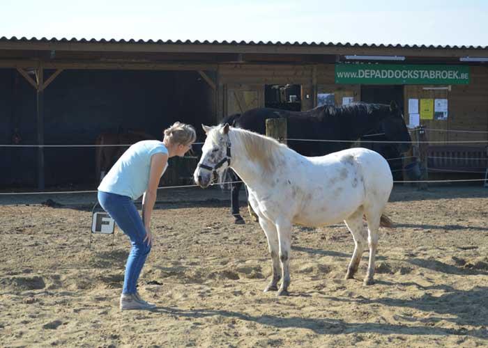 Kennismaking met paard