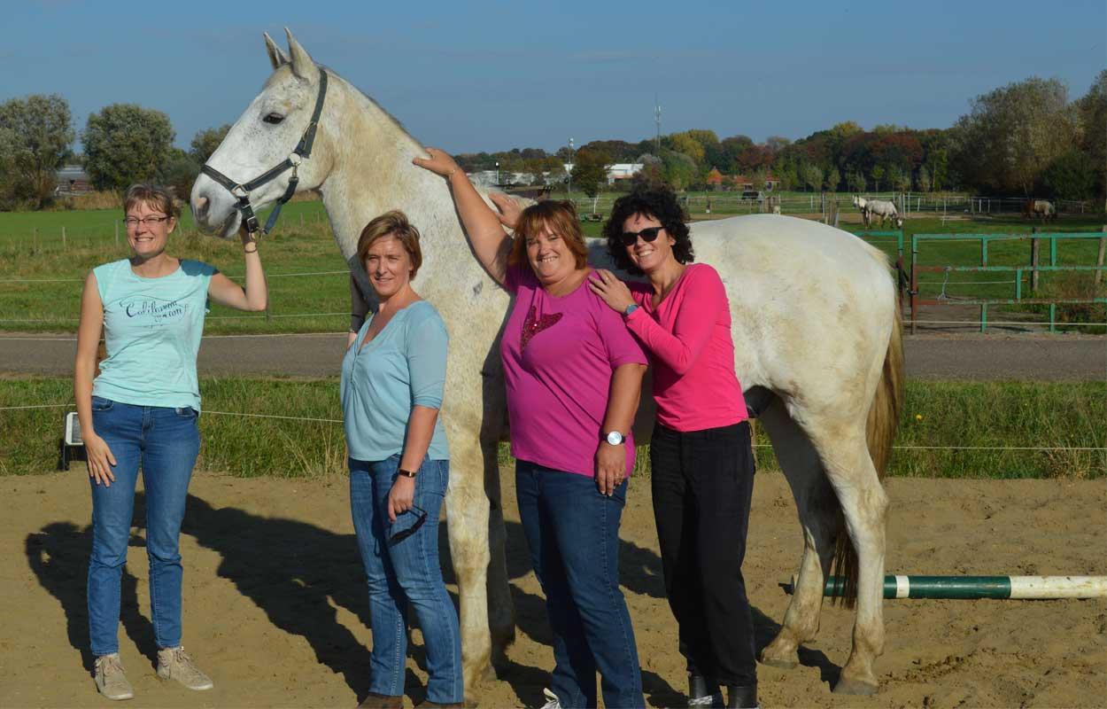Review Teambuilding met paarden
