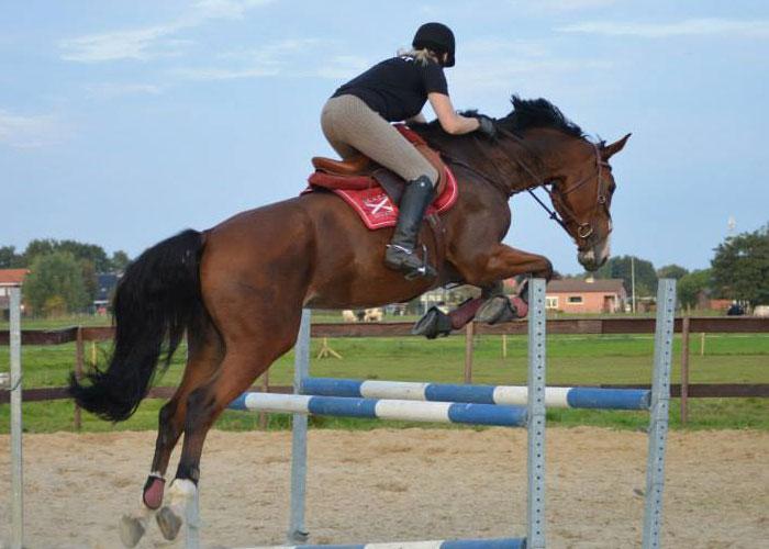 springlessen paardrijden